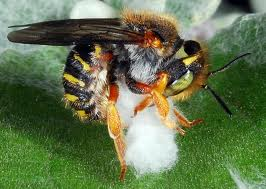 bee with fluff